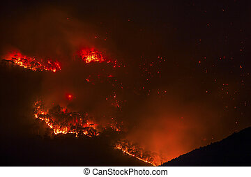 Forest fire burning at night orange and red color