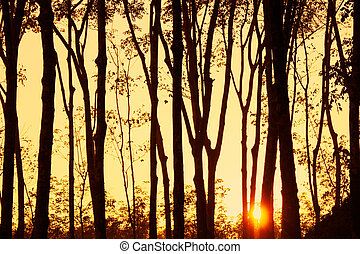 beautiful sunset light ray sunshine with tree silhouette...