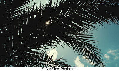 Sun playing in palm leaves