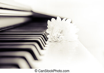 Close-up detail of piano keyboard and flower in monochrome -...