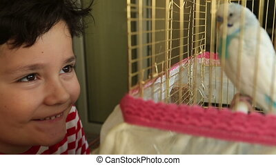 Little boy likes budgie - Little boy boy looking to his...