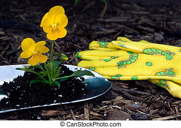 Gardening - Pansy in a shovel with gardening gloves on bark.
