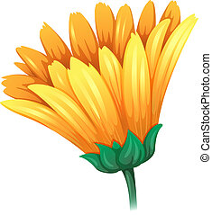 A fresh yellow flower - Illustration of a fresh yellow...