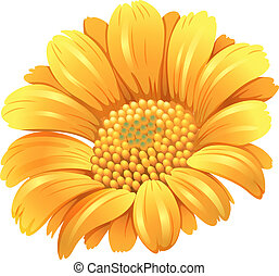 A fresh blooming flower - Illustration of a fresh blooming...