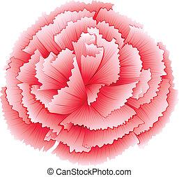 A carnation pink flower - Illustration of a carnation pink...