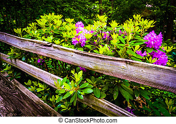 Flowering bush and a fence.  - Flowering bush and a fence.