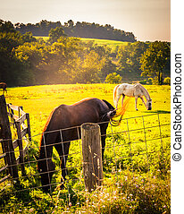 Horses and fence in a field in rural York County, Pennsylvania.