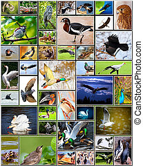 Collage of birds - Collage of various species of birds