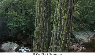 Merced River, Yosemite National Park - Tree and boulders...
