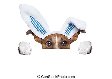 dog easter bunny - dog dressed up as bunny behind white...