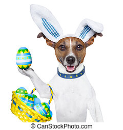 dog easter bunny - dog dressed up as bunny with easter...