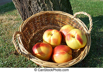 Nectarine in a basket