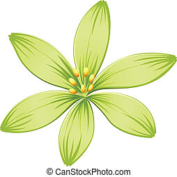 A green flower - Illustration of a green flower on a white...