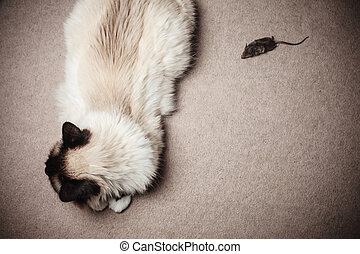 Cat and mouse - A cat and a mouse indoors on a carpet at...