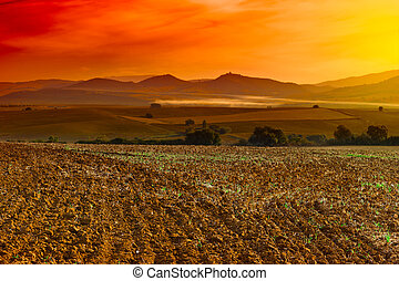 Plowed Field in Spain, Sunset