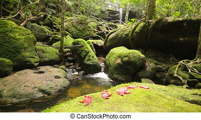 Dolly:Beautiful waterfall in forest - Dolly: Beautiful...