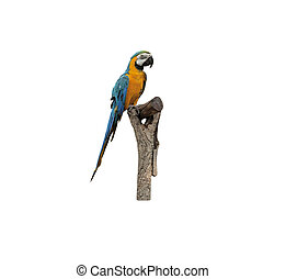 Beautiful Pet Parrot isolated on white background.