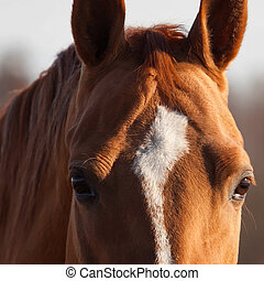Horse portrait - Portrait of beautiful Russian Don horse,...