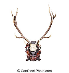 Antlers of a huge stag