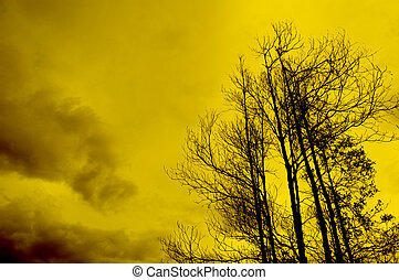 silhouette of tree in sunset