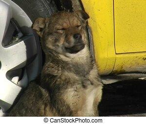 hound dog sleep on the snow near the yellow car