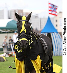 horse dressed for jousting - a horse dressed for jousting