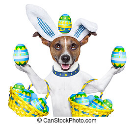 dog easter bunny - dog dressed up as easter bunny holding...