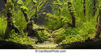 aquático, plantas, tropicais