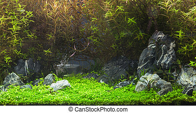Aquatic plants in tropical - A green beautiful planted...