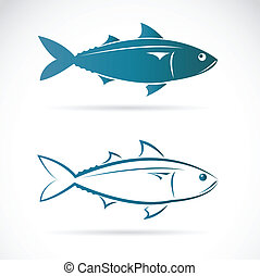 Vector image of an mackerel on white background