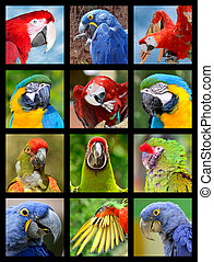 Mosaic photos of parrots - Twelve mosaic photos of portrait...