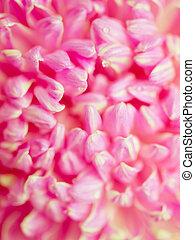 abstract pink petals