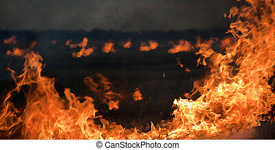 fire at night on the field