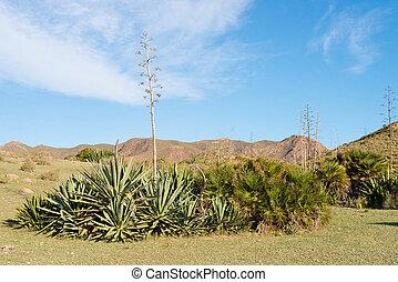 Desert landscape - Classic desert landscape amidst Cabo de...