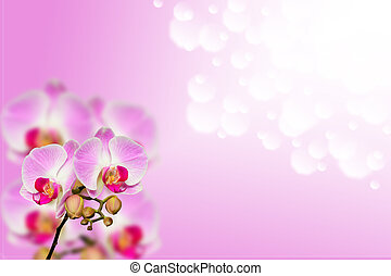 Small branch of gentle orchids on gradient bokeh background...