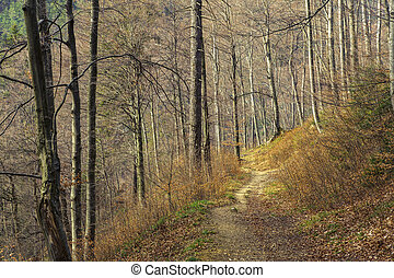 Foot trail in the forest - Meandering foot trail in dense...