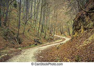 Path in the woods - Winding pathway in dense deciduous...