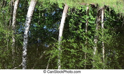 ripple water birch tree - Ripple lake water surface and...