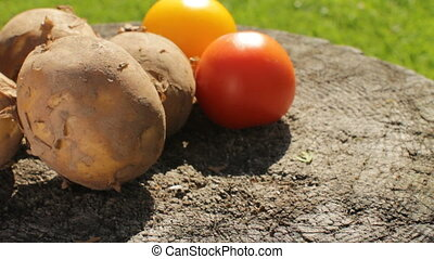Harvest of Vegetables in August - Harvest of potatoes,...