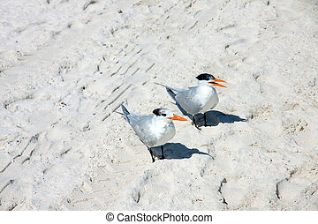 Birds - Two birds on the beach in Mexico