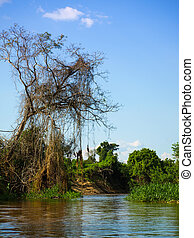 Amazonian river bay - Lush vegetation at amazonian river in...