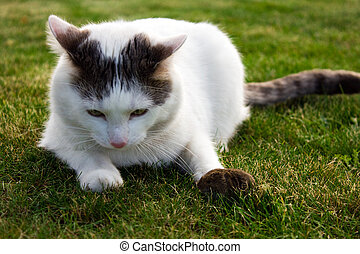 cat mouse - Mouse is trying to escape from the cat