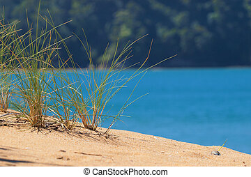 Brightly Colored Dune Grass - Brightly Colored Grass in a...