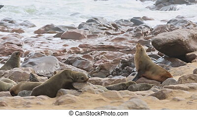 Sea Lions - Group of sea lions looking to the sky over the...