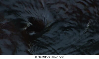 Whirlpool eddy - Small whirlpool eddy formed in the Merced...