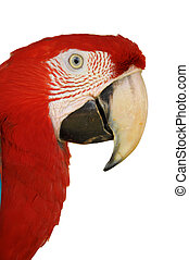 Green-winged Macaw - A Close up Green-winged Macaw face...