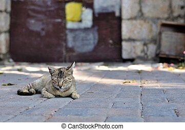 Tabby cat laying on the ground