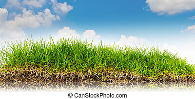 Spring nature background with grass and blue sky in the back .summer time