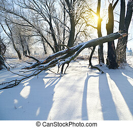 frozen trees in winter season. Nature composition.