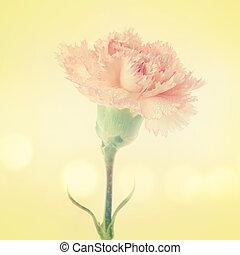 Carnation flower - Close up pink carnation flower on vintage...